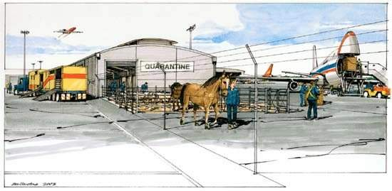 A livestock transfer area with quarantine facilities is planned for the cargo area of Adelaide Internaitonal Airport.